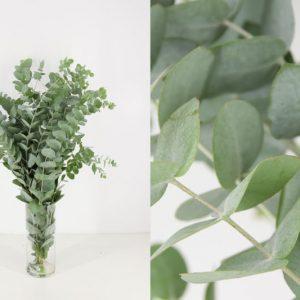 ramo atado eucalipto
